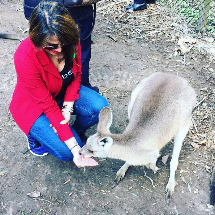 Feeding the kangaroo